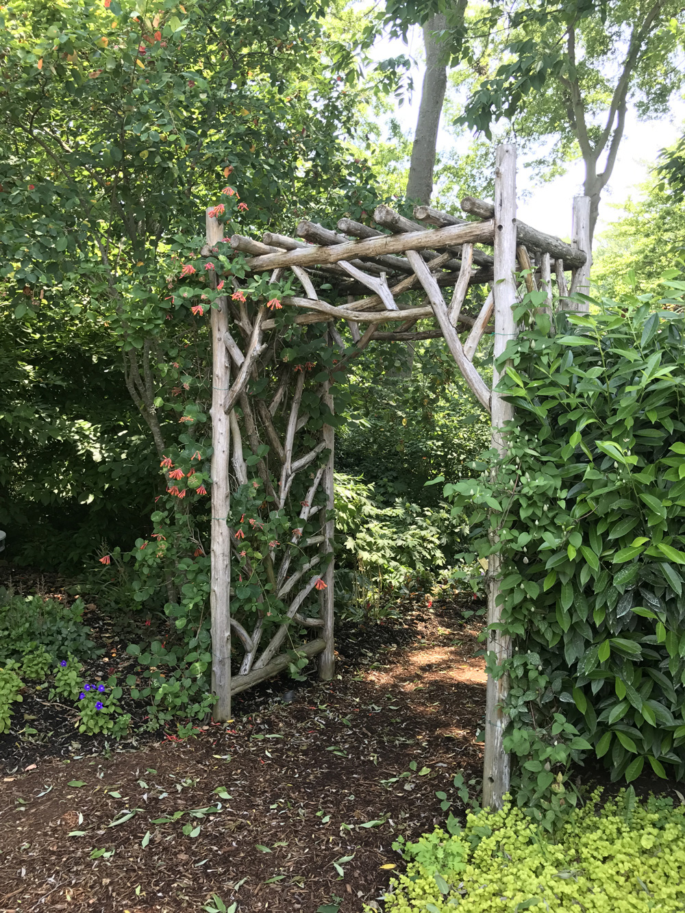 Rustic Arbors Pergolas Wedding Chuppahs Branch Trellises For Sale